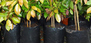 Category Black Poly Planter Bags - for more info, go to planterbags.co.nz
