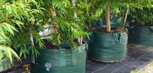 Woven Bags Category Planter bag plant Growbag - Planter Bag Supplies NZ - for more info go to planterbags.co.nz