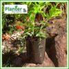 1 litre poly planter bag plant Growbag - Planter Bag Supplies NZ - for more info go to planterbags.co.nz