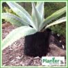 1.5 litre poly planter bag plant Growbag PB2 - Planter Bag Supplies NZ - for more info go to planterbags.co.nz
