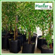 Poly-10-litre-Plant-Growbags-2