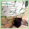 10 litre Standard Poly Planter bag plant Growbag PB18 - Planter Bag Supplies NZ - for more info go to planterbags.co.nz