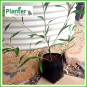 Poly-10-litre-Plant-Growbags-3