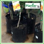 Poly-4-litre-Plant-Growbags-2