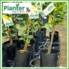 5 litre tall poly planter bag plant Growbag - Planter Bag Supplies NZ - for more info go to planterbags.co.nz