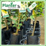 Poly-5-litre-Tall-Plant-Growbags-2