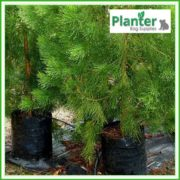 Poly-20-litre-TALL-Plant-Growbags-2