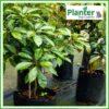25 litre Poly Planter bag plant Growbag PB40 - Planter Bag Supplies NZ - for more info go to planterbags.co.nz