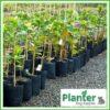 35 litre Poly Planter bag plant Growbag PB60 - Planter Bag Supplies NZ - for more info go to planterbags.co.nz