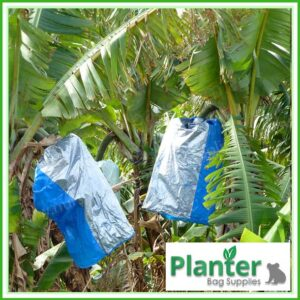 Banana Bunch Cover Bags Blue - for more info go to planterbags.co.nz