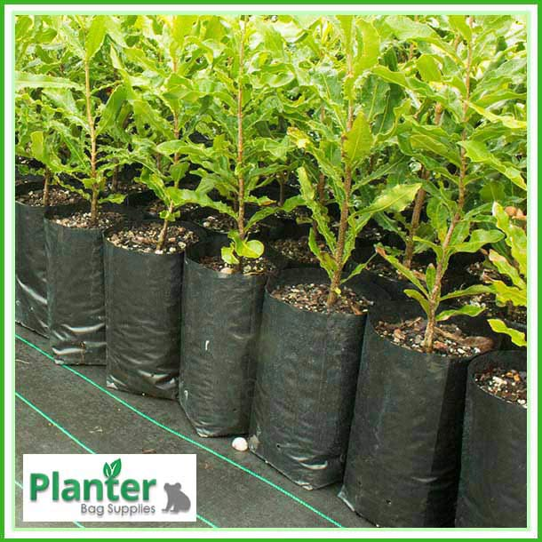 Black Poly Planter Bags - Planter Bag Supplies NZ - for more info go to https://planterbags.co.nz/