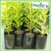 10 litre Tall Poly Planter bag plant Growbag - Planter Bag Supplies NZ - for more info go to planterbags.co.nz